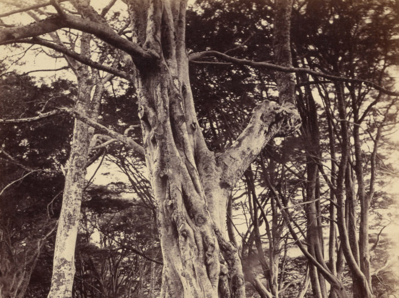 A photograph of a tree.