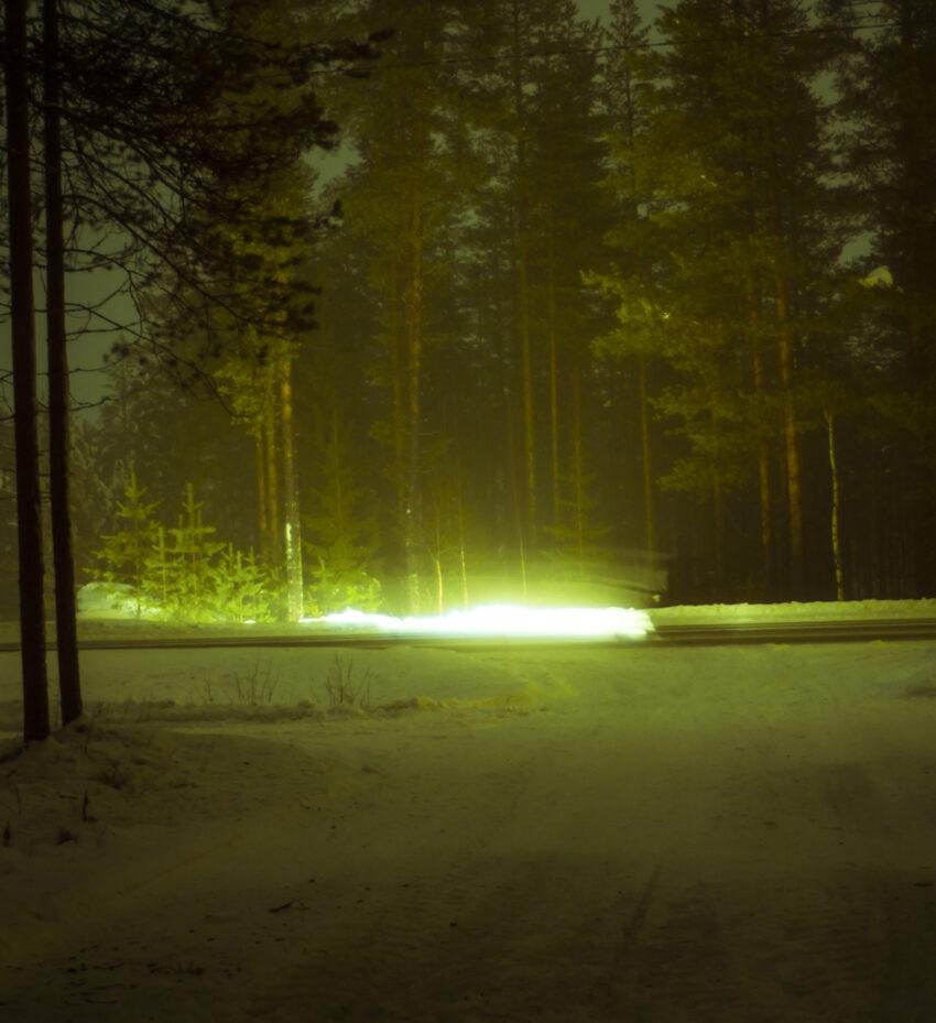 Maria Lax green light in trees photo