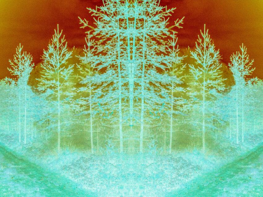 Maria Lax trees negative image