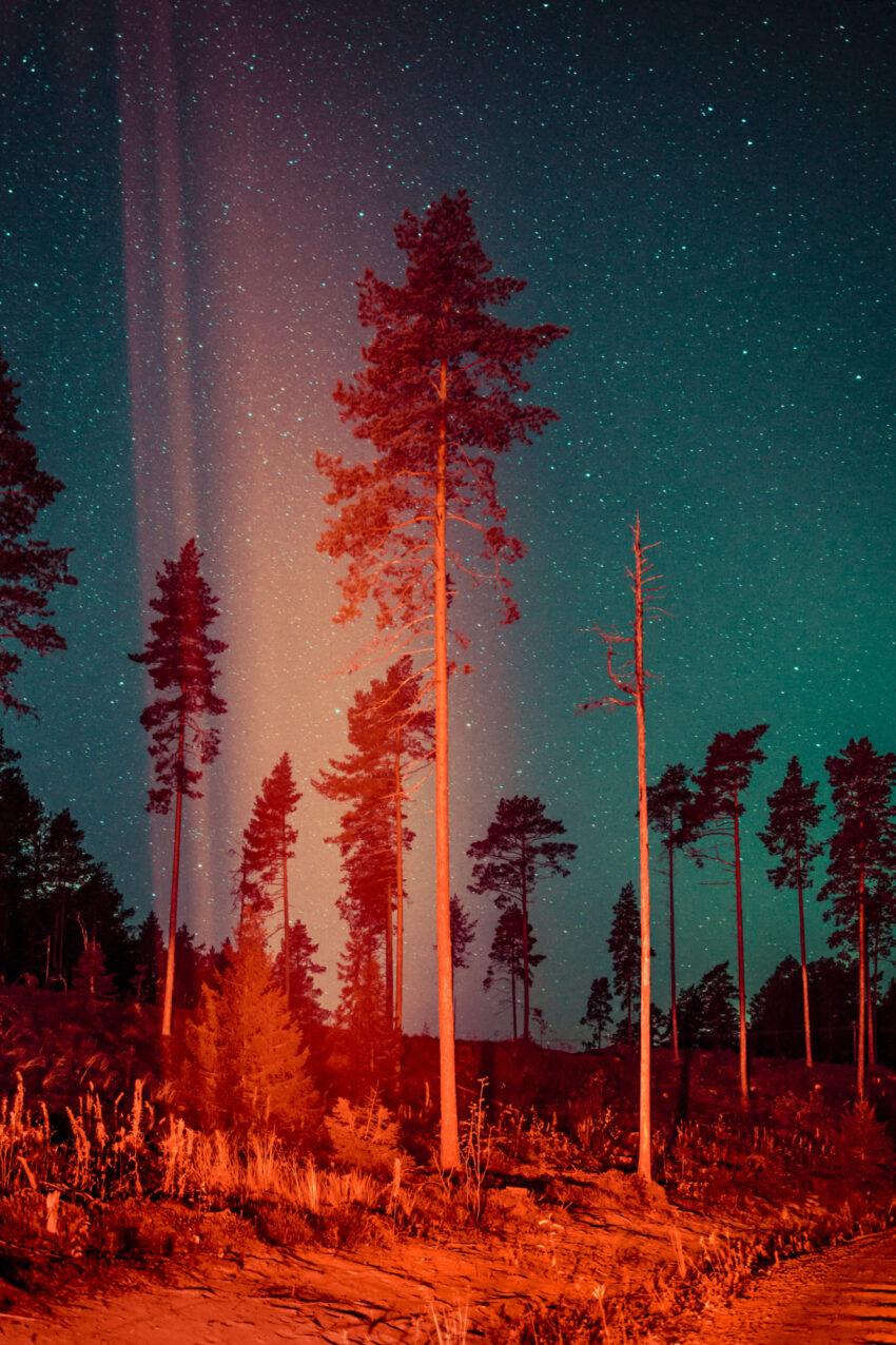 Maria Lax Tree and stars photo