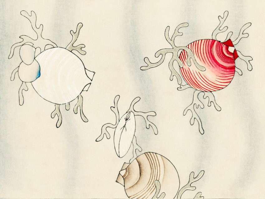 Drawings of shellfish