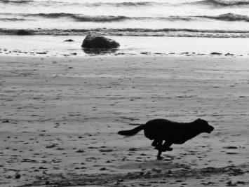 Black-and-white photo of dog running by ocean. Phil Dolby / Creative Commons