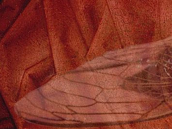 Red painted background with overlay of a cicada wing. Illustration by NP Sullo.