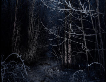 Photograph of a forest at night. Fredrick Matheson / Creative Commons