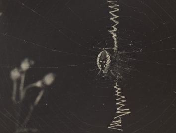 Spider on its web. Detail from Keystone View Co., Writing Spider and Web, ca. 1900. Courtesy The J. Paul Getty Museum, L.A.