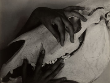 Georgia O'Keeffe, Hands and Horse Skull, Alfred Stieglitz, 1931. From the Art Institute of Chicago.