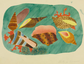 Mary Altha Nims, Shells in Seaweed, 1934. From the Cleveland Museum of Art.