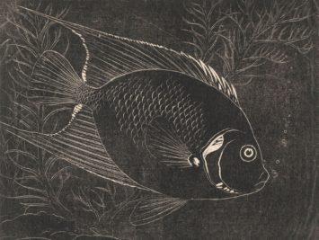 Fish etched in white on black surface. Henri Verstijnen, Chaetodon Fish, ca. 1892–1931. Courtesy Rijksmuseum, Amsterdam.